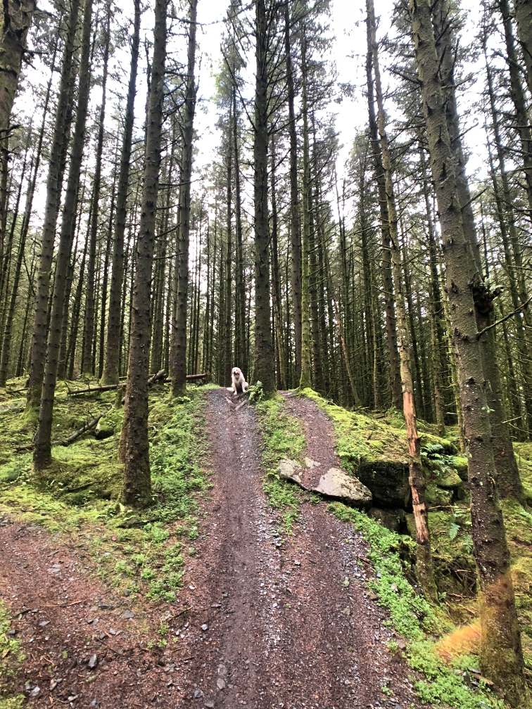 ni_explorer_davagh_forest_mountain_biking_northern_ireland (14).jpg