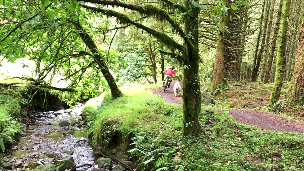 ni_explorer_davagh_forest_mountain_biking_northern_ireland (33).jpg