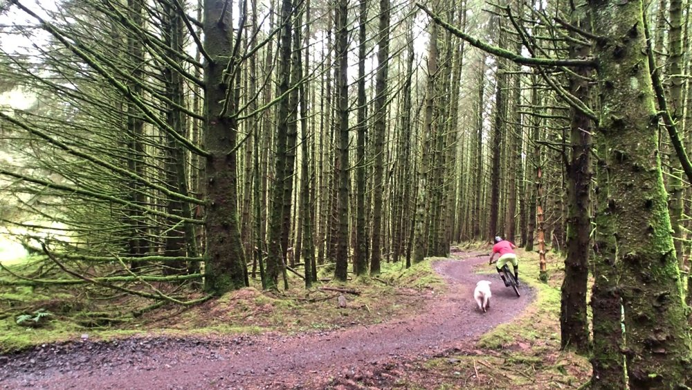 ni_explorer_davagh_forest_mountain_biking_northern_ireland (5).jpg