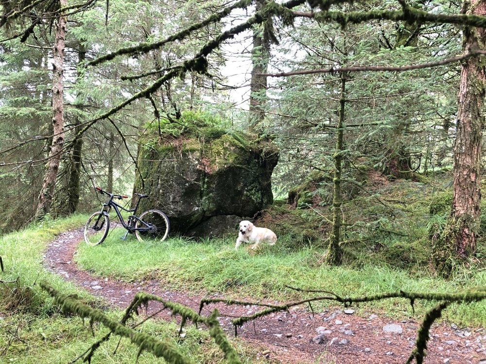 ni_explorer_davagh_forest_mountain_biking_northern_ireland (12).jpg