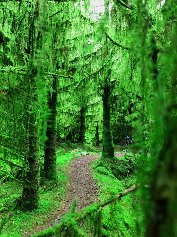rostrevor-kilbroney-forest-county-down-mountainbiking-northern-ireland (3).jpg
