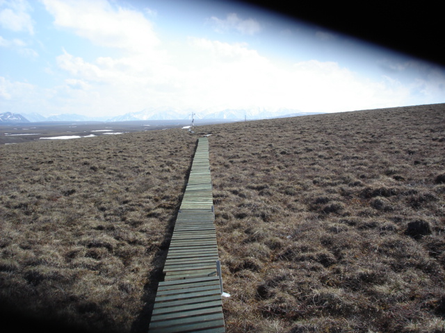 Researchers access their study plots via this boardwalk to avoid crushing the tundra. Photo: Jason Neely