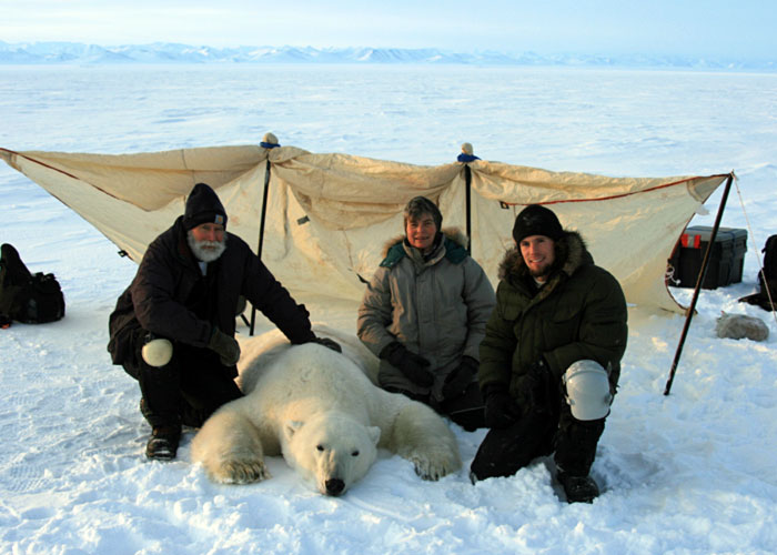 Dr. Henry Harlow, Dr. Merav Ben-David, and John Whiteman (left to right) with an adult male polar bear who has been sedated for measurements. They're sitting in front of a temporary windbreak (to make measurements easier) on sea ice off the northern coast of Alaska in October 2008. Photo: John Whiteman
