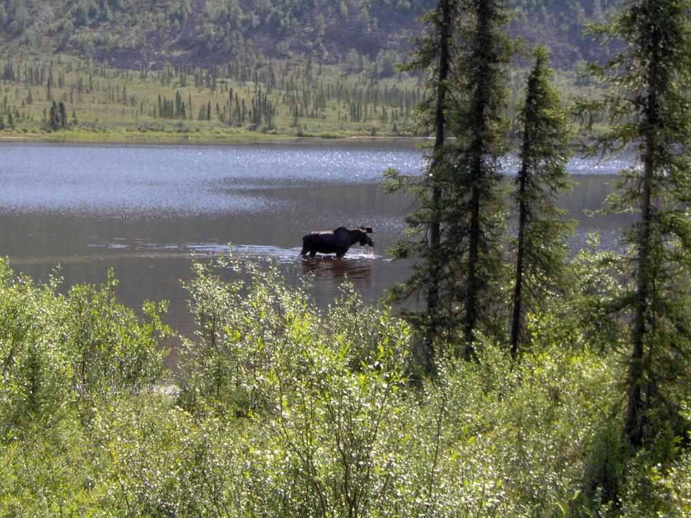 moose-grayling-lk3.jpg