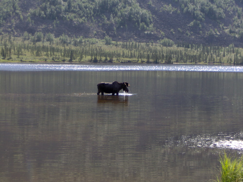 moose-grayling-lk4.jpg