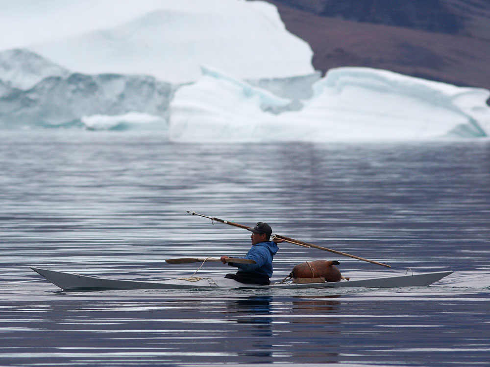 Inuit colleagues used kayaks and harpoons to help Laidre fit narwhals with tracking devices. Photo: Kristin Laidre