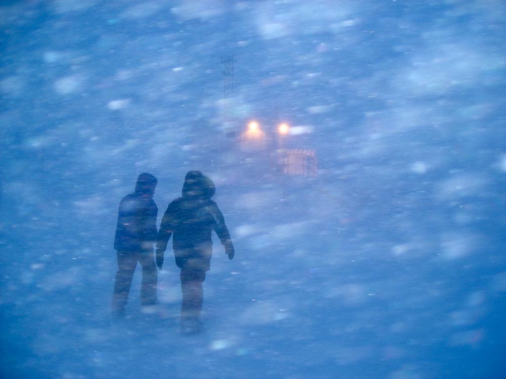 Summit Snow Flies