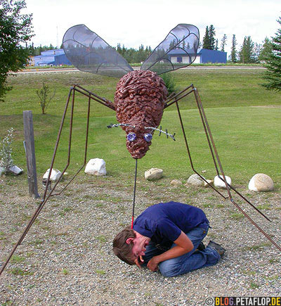 giant-mosquito-bites-riesenmoskito-riesenmuecke-end-of-alaska-highway-mile-1422-delta-junction-alaska-usa-dscn0969