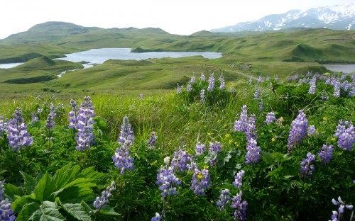 Heart Lake Adak