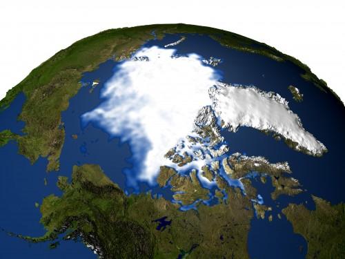polar_bears3_h1