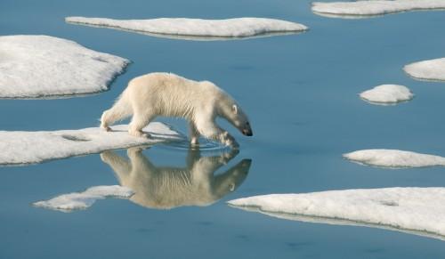 Arctic8