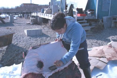 Ugruk Skinning-Marjorie Tahbone-Kawerak Subsistence Collection 2010