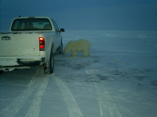 Understatement of the year: a close call with a polar bear.