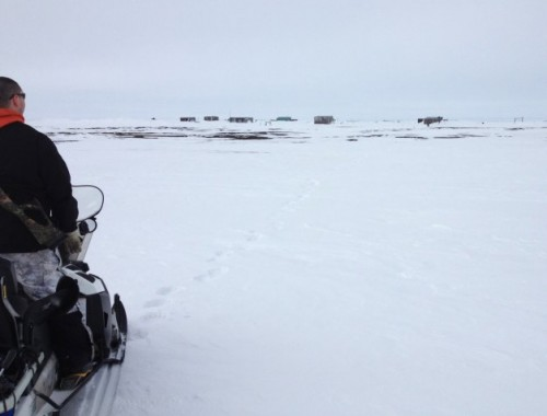 Bear guard Brower Frantz surveys polar bear tracks on the way to Point Barrow. Photo: Molly Rettig