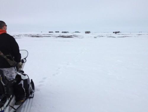 Bear guard Brower Frantz surveys polar bear tracks on the way to Point Barrow. Photo: Molly Rettig