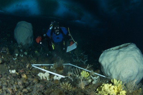 Rob Robbins under the ice, Arrival Heights, McMurdo Sound, Ross Sea, Antarctica