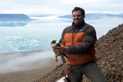 Kurt Burnham with adult female Peregrine Falcon. All photos courtesy: High Arctic Institute