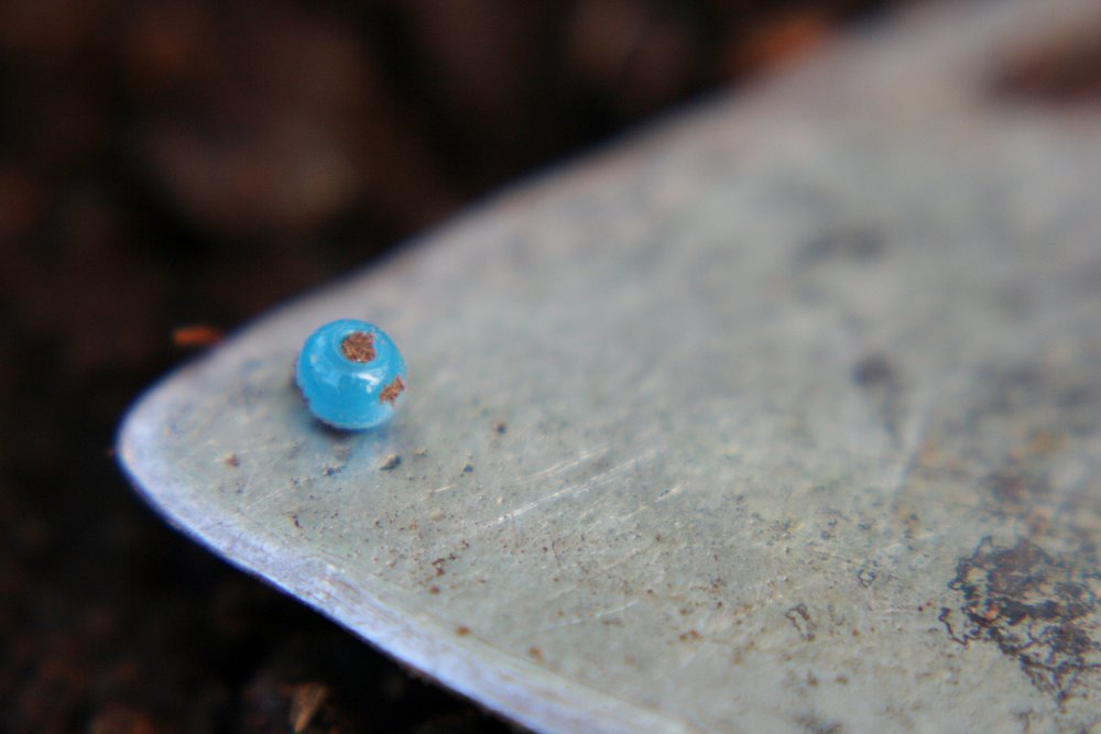 A turquoise-blue trade bead found inside an 1880s family dwelling at Keik'uliyáa seal camp, Disenchantment Bay 2013. Photo: Emily Silber