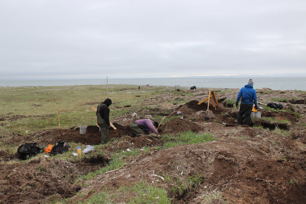 A team of archaeologists excavate a highly disturbed site at Port Clarence, AK. All photos: Shelby Anderson