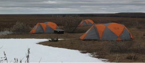 """""""The change in landform and vegetation over the past decade is remarkable,"""" writes Dahl in his report from the field. """"The pad used to be free of bush and quite flat. It is now a bit challenging to find spots to set up camp"""". The Zona instrument towers are seen in the background. All images: Tracy Dahl"""