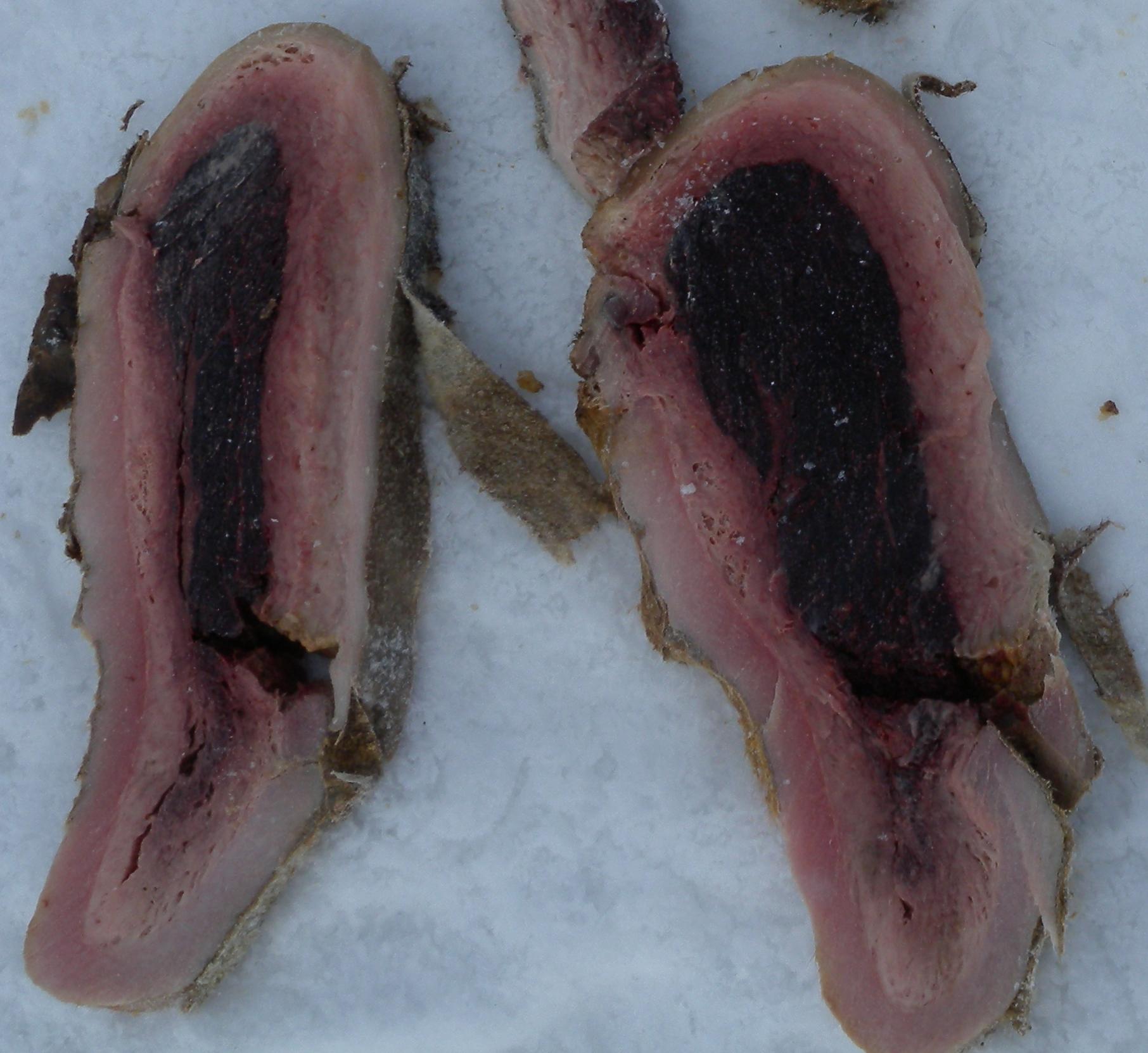 A walrus roulade is shown up close. All photos courtesy Sveta