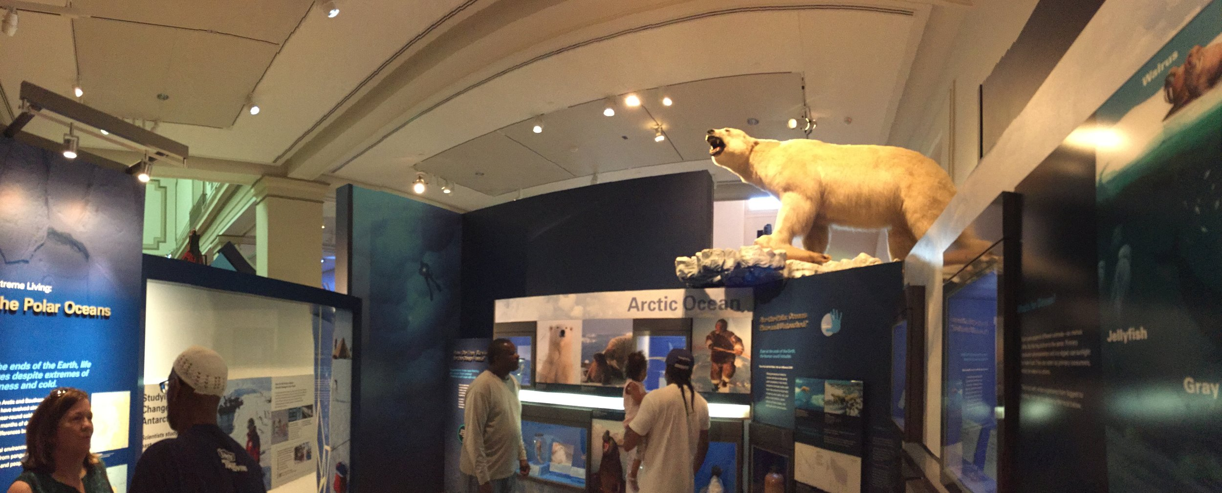 Crowds filled the halls of the Smithsonian National Museum of Natural History in Washington, D.C. to learn about all things Arctic. The Arctic Spring Festival, May 8-10, 2015, was held to celebrate the people, cultures and science of the region. The festival marks the United States' 2015-2017 chairmanship of the Arctic Council.