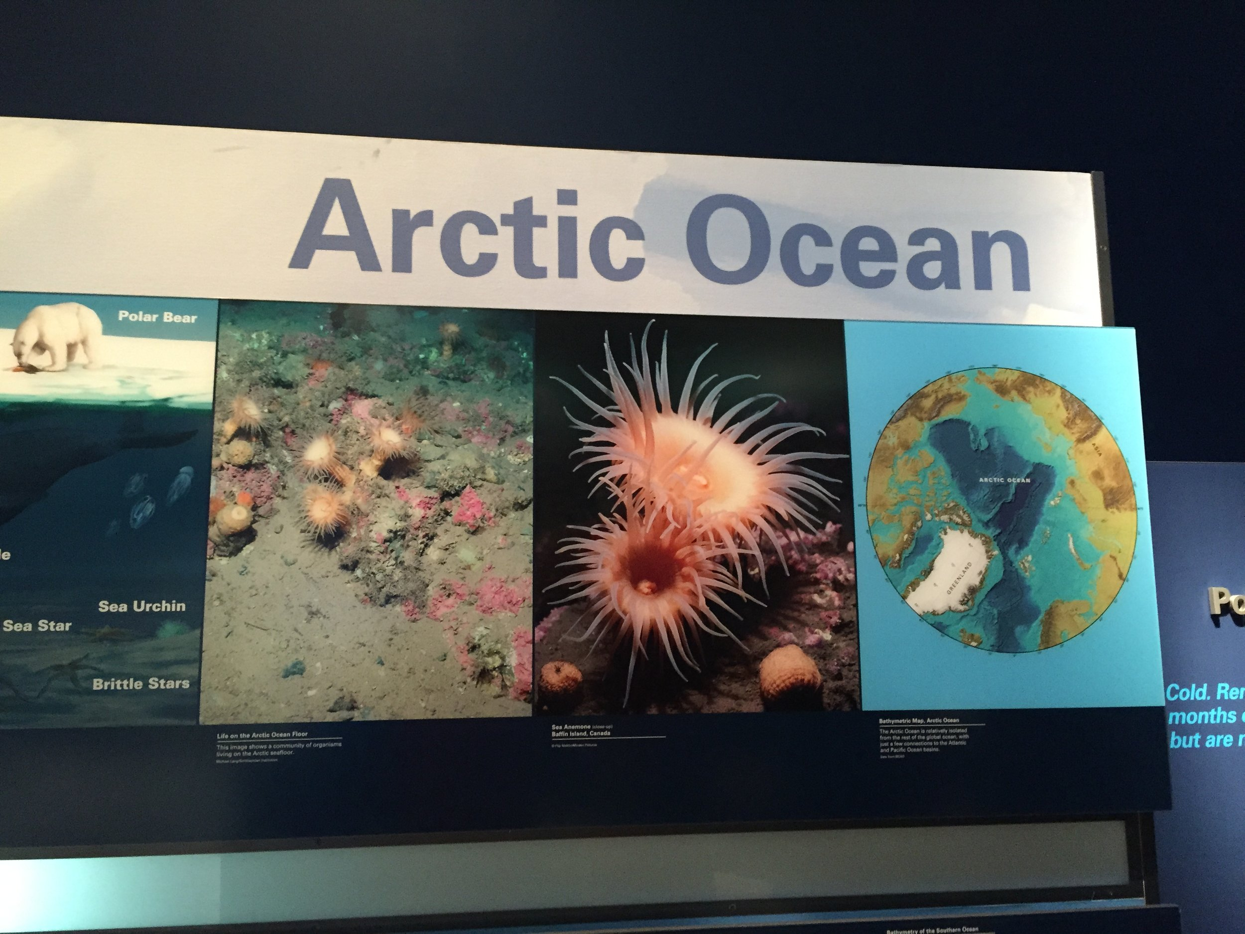 Visitors could explore the diversity of marine life found in the Artic Ocean in the museum's Sant Ocean Hall.