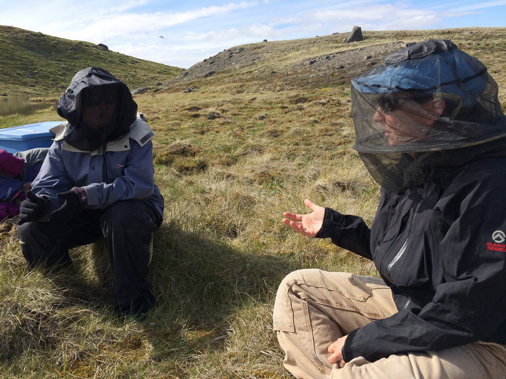 Two field assistants dress in mosquito protection in the Kangerlussuaq area in western Greenland. Photo: Robbie Score