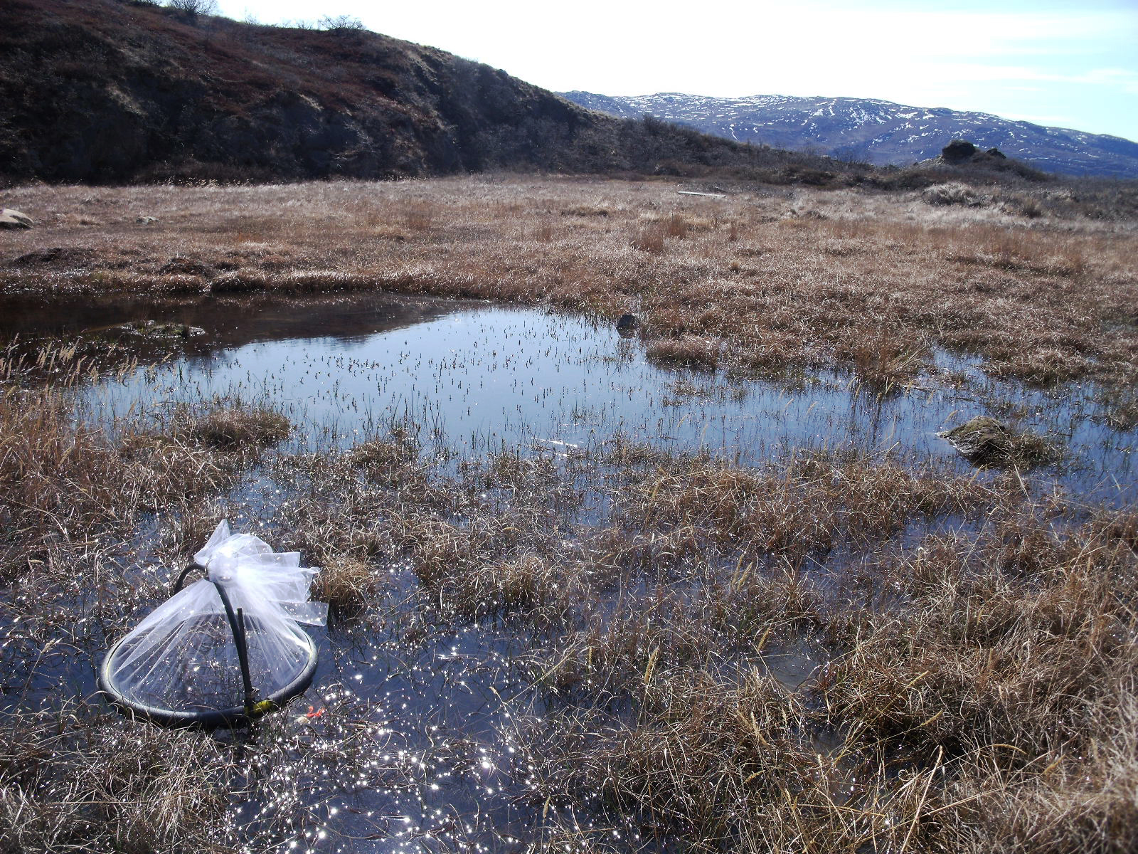 A trap captures mosquitoes from a Greenland pond. Photo: Lauren Culler