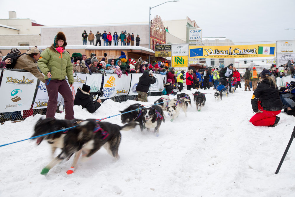 The 2014 Yukon Quest gets under way in Fairbanks, Alaska. Photo: Arthur T. LaBar