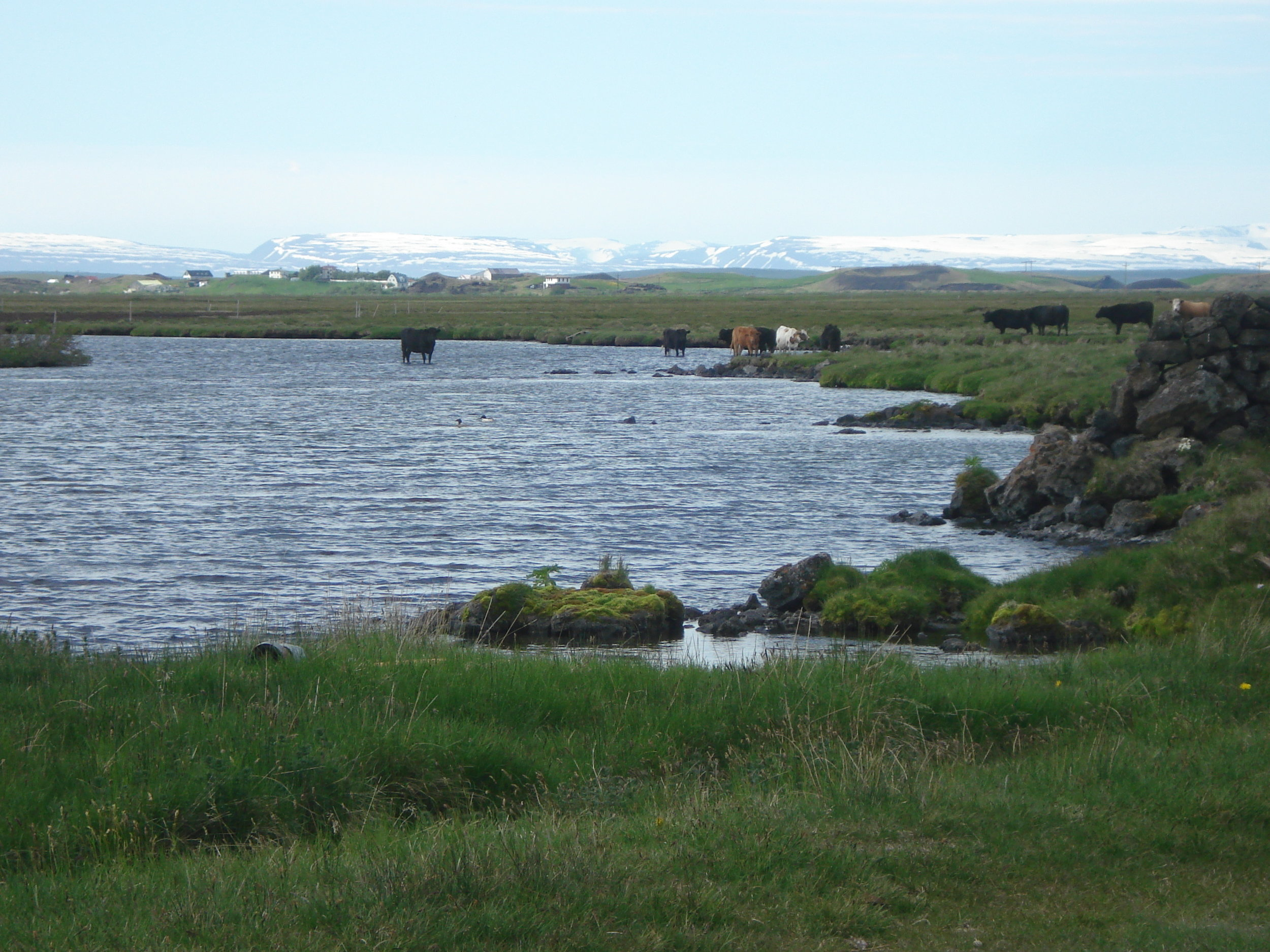 A landscape scene from the Myvatn area. Photo: Astrid Ogilvie