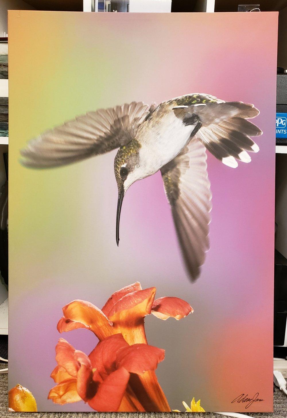 Giclee Humming Bird Print