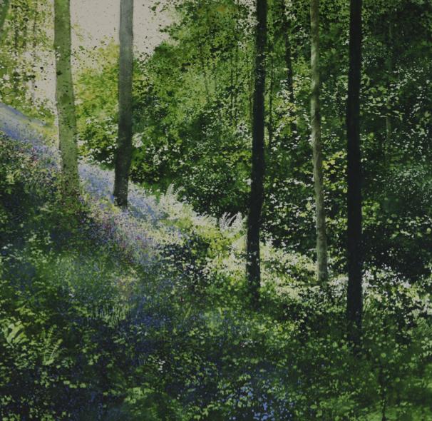 Spring, Wisemans Woods