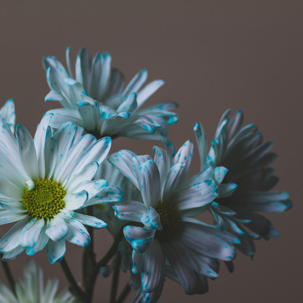 Blue: Hour 12