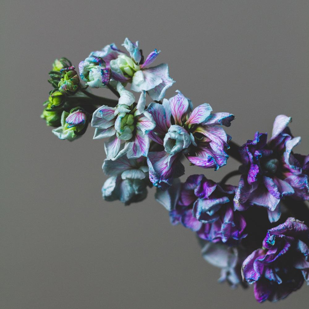 Purple: Hour 24