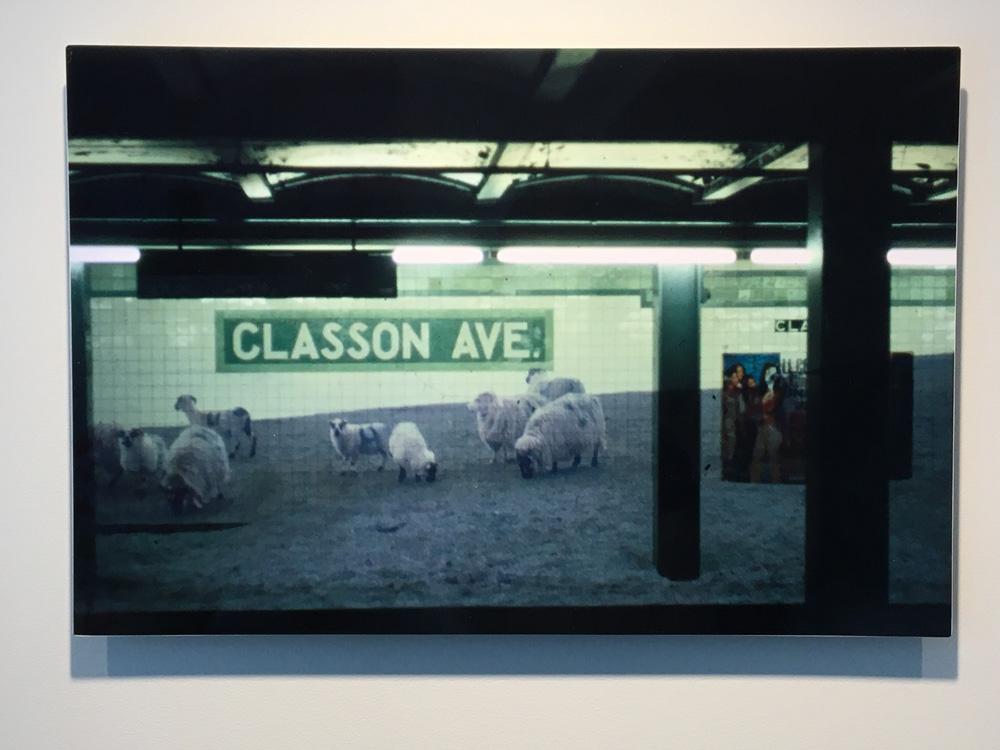 sheeple-print.jpg