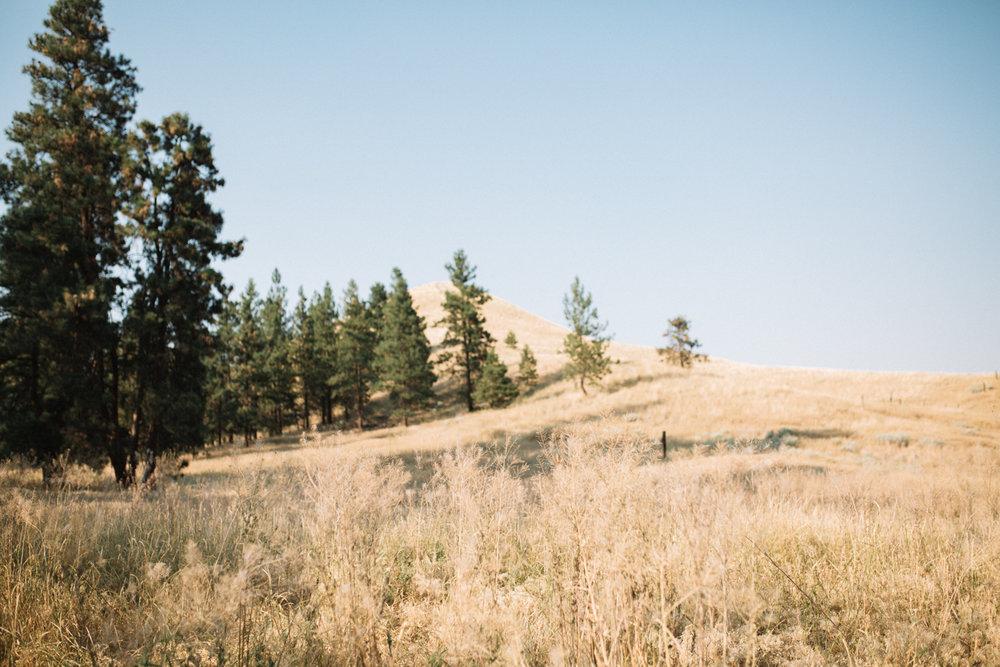 Okanagan-Weddding-ivyandrosephoto-49.jpg