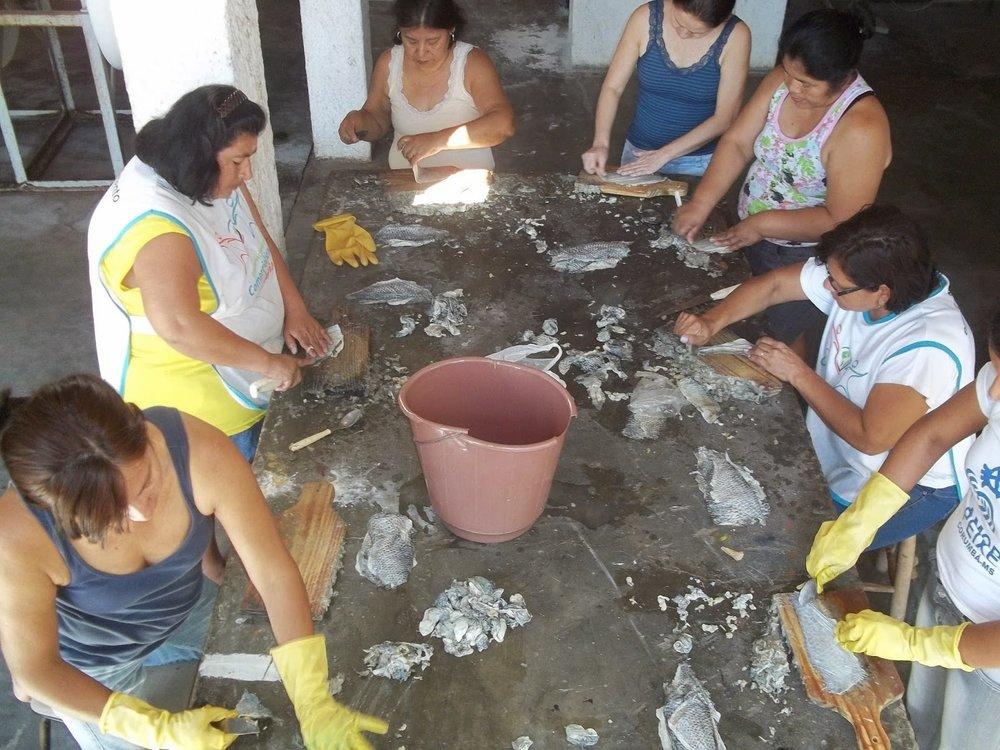 """""""Amor-Peixe"""" Association in Brazil  Image: portaldopescado.blogspot.com"""