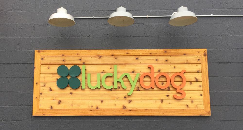 lucky dog.jpg