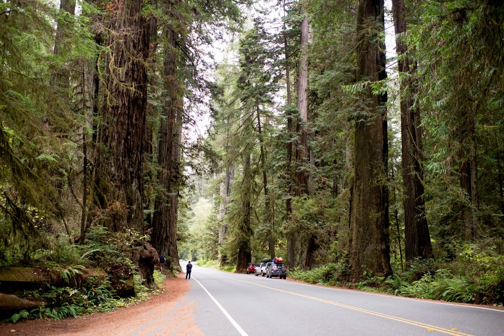 Redwood National  State Parks CA