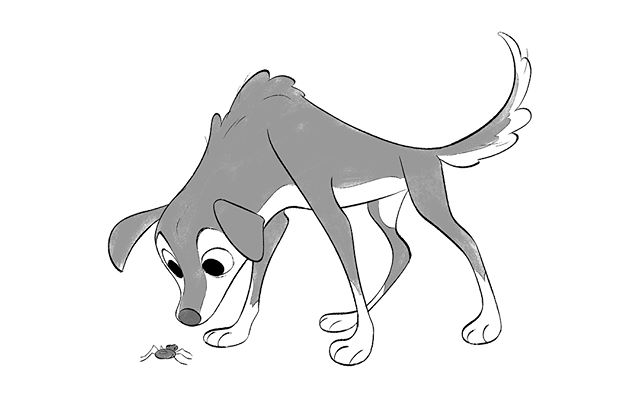 Dog finds a bug . Swipe to see the scribble I start all my drawings with 🐶 . . . . . #bordercollie #bordercolliepuppy #dog #characterdesign #inktober #inktober2018 #cbjart #inkdrawing #digitaldrawing