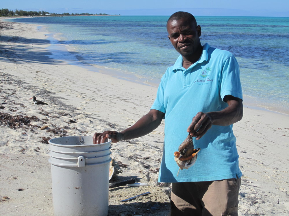 Providenciales has one of only two conch farms in the world - this man is harvesting them right on the beach outside da Conch Shack.
