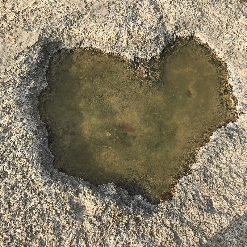 My friend Jenna looks for hearts in nature all the time, so when I see them now, I think of her. This one was right in the middle of my path at Bull creek park.