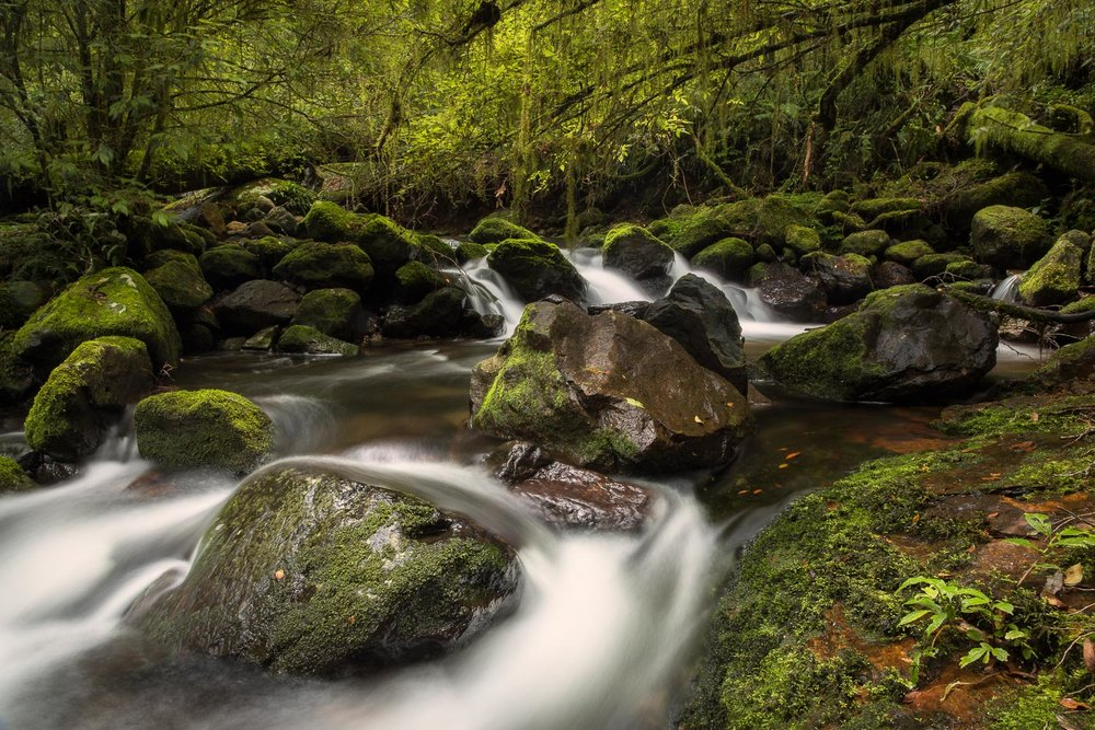 Five Day Creek, New England National Park [NEW24]