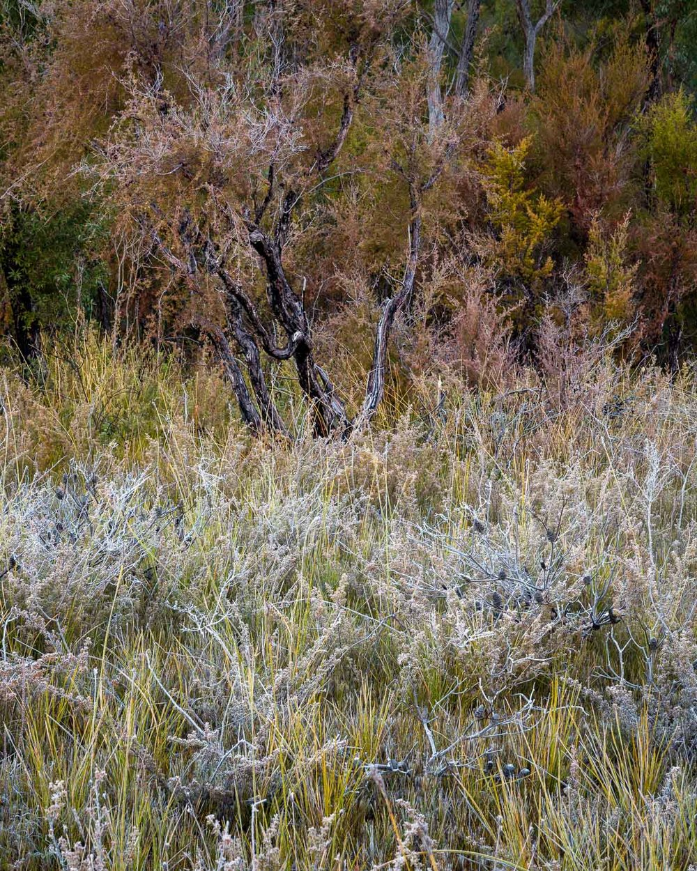 Frost, Gibralltar Range National Park [NEW02]