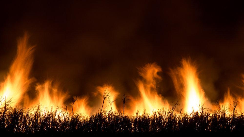 Sugar Cane Fire [YAM12]