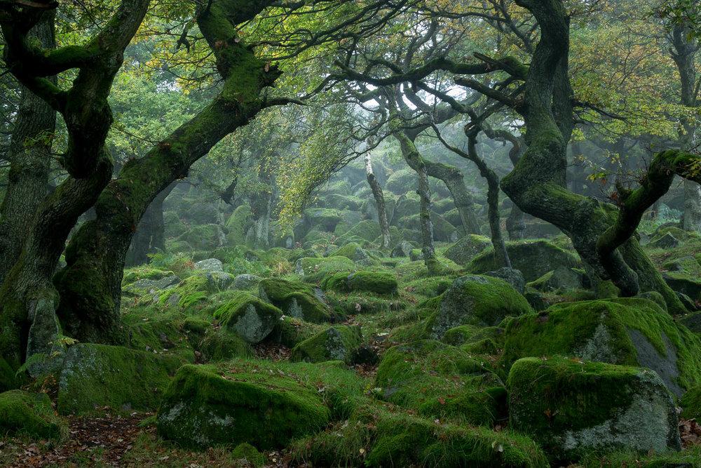Padley Gorge, Derbyshire [EW08]