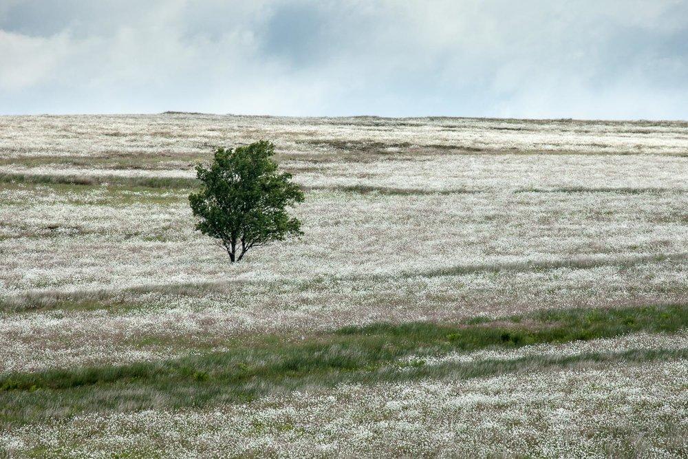 Totley Moor, Yorkshire [EW24]