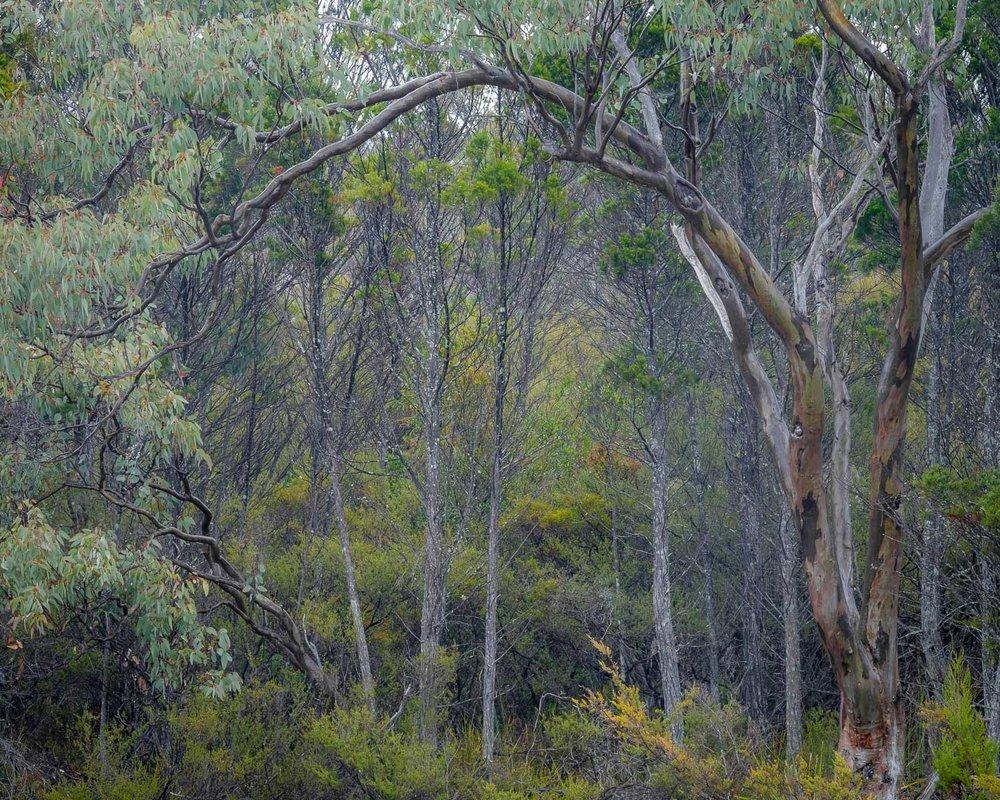 Bushland, Girraween NP [GIR12]