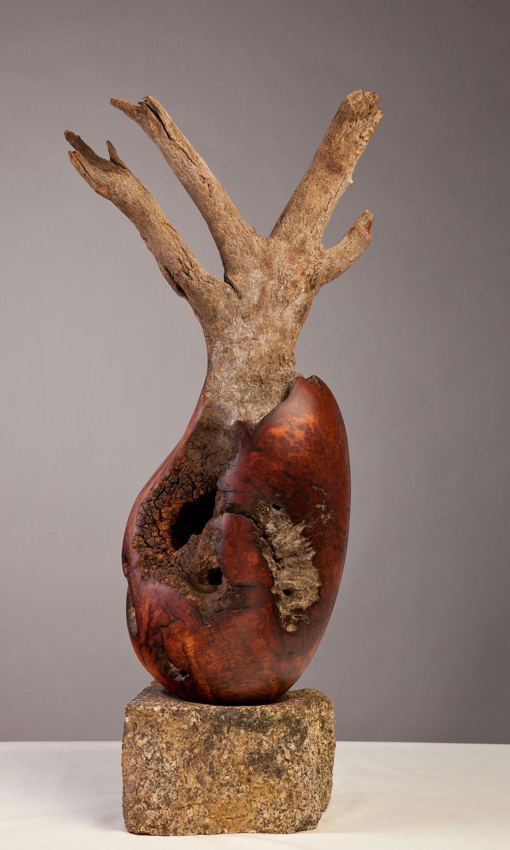 Mallee root sculptures-65.jpg